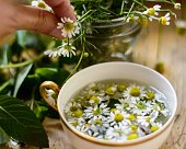 Healthy living and organic lifestyle, woman making fresh Chamomile Tea (Matricaria Recutita) with chamomile flowers and mint leaves closeup of hand picking flowers and vintage gold rim tea cup with ho