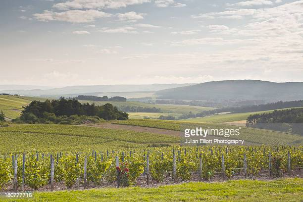 Champagne vineyards in the Cote des Bar area.