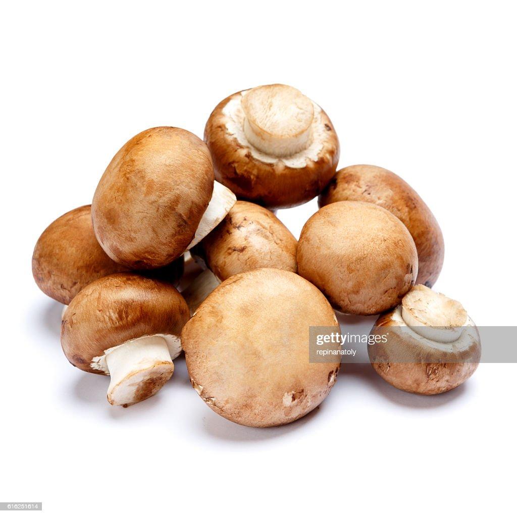 champignon mushroom isolated on white : Foto de stock