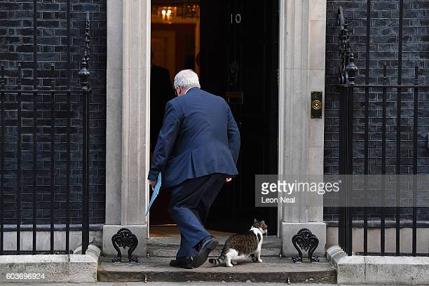 Chancellor of the Duchy of Lancaster Patrick McLoughlin dodges Larry the Downing Street cat as he arrives ahead of the weekly Cabinet meeting in...