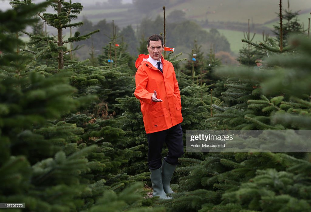 Chancellor of the Exchequer <a gi-track='captionPersonalityLinkClicked' href=/galleries/search?phrase=George+Osborne&family=editorial&specificpeople=5544226 ng-click='$event.stopPropagation()'>George Osborne</a> visits Marldon Christmas Tree Farm on October 23, 2014 in Marldon, England. The Chancellor is on a two day tour meeting with women working in the UK economy.