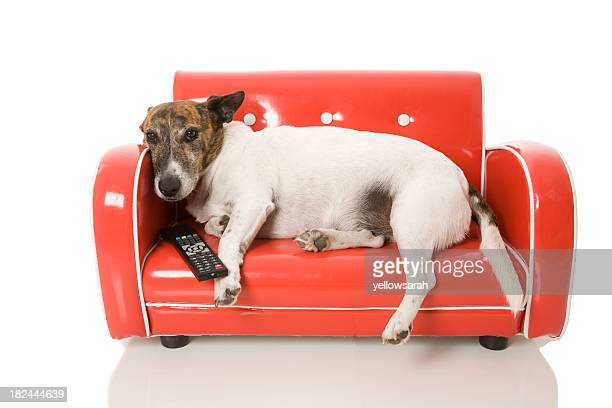 Channel Surfing Dog
