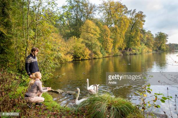 walk in the forest of Chantilly near the ponds of Commelles grounds of Chantilly Couple and swans by a pond in autumn