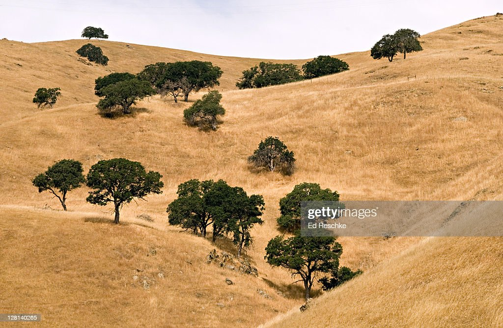 Chaparral Biome, Merced County, California, USA. This biome has mild winters with abundant rainfall, and extremely dry summers. Chaparral has evergreen shrubs and small trees. Frequent fires occur in the chaparral.