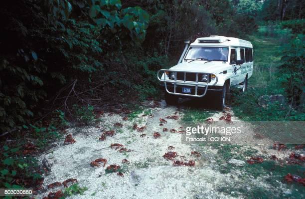 Chaque année les crabes rouges inoffensifs envahissent Christmas Island pour leur reproduction malgré leur nombre impressionnant les automobilistes...