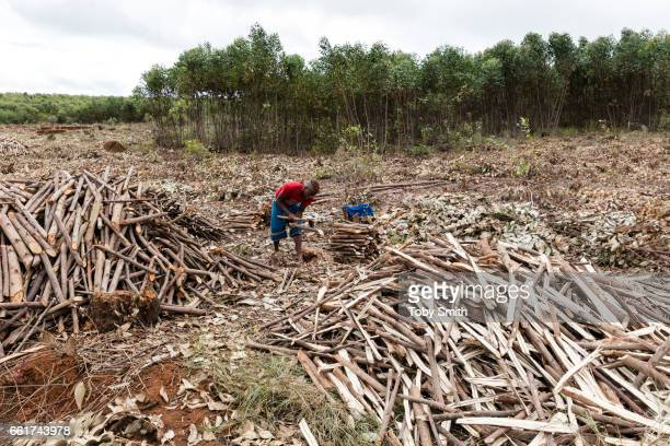 Charcoal is a major cause of deforestation