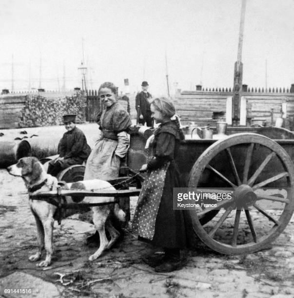 Chariot de lait tiré un chien à Anvers Belgique au début du XXe siècle