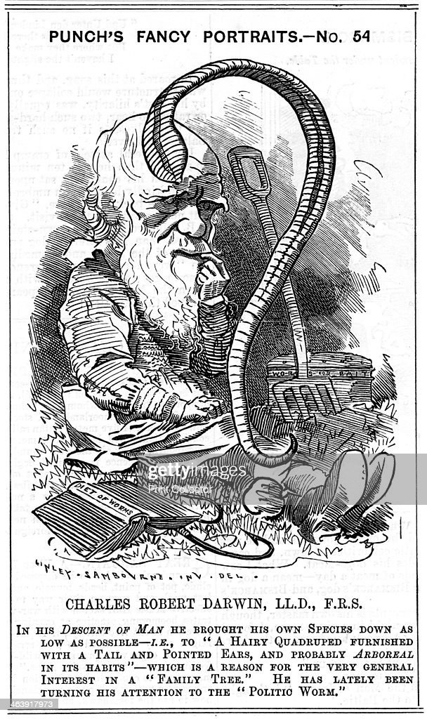 Charles Darwin English naturalist 1881 As well as his better known work on evolution by natural selection Darwin's studies covered other subjects In...