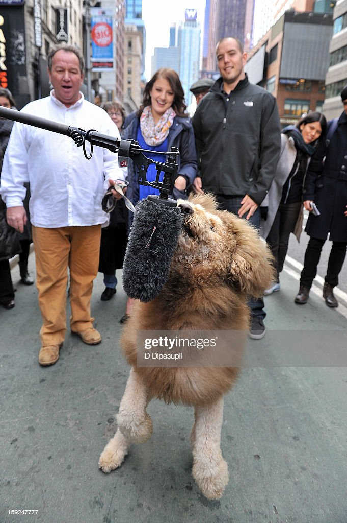 Charles the Monarch owner Daniel Painter, daughter Natalie Painter, and Ryan Jensen look on as Charles the Monarch visits 'Extra' in Times Square on January 10, 2013 in New York City.