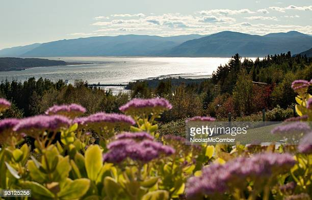 Charlevoix landscape with stonecrop flowers