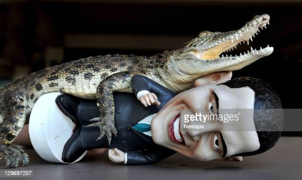 'Charlie' the baby Saltwater Crocodile with a figurine of US President Barack Obama at Crocodylus Park on October 18 2011 in Darwin Northern...