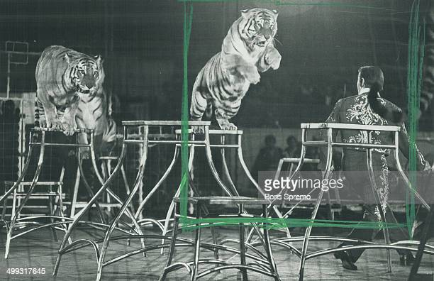 Charly Baumann the world's greatest tiger trainer and his cageful of Royal Bengal and Siberian tigers The Flying Gaonas The First Family of The Air...