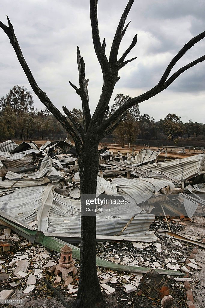 A charred tree stands among debris after a fire in the town of Seaton on January 19, 2013 in Melbourne, Australia. Bushfires in Victoria have claimed one life and destroyed several houses. Record heat continues to create extreme fire conditions throughout Australia.