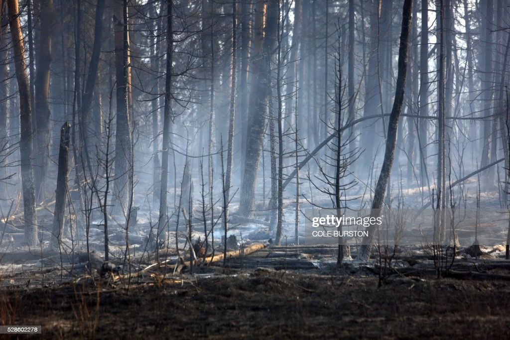 Charred trees are seen along a highway near Fort McMurray, Alberta, on May 6, 2016. Canadian police led convoys of cars through the burning ghost town of Fort McMurray Friday in a risky operation to get people to safety far to the south.In the latest chapter of the drama triggered by monster fires in Alberta's oil sands region, the convoys of 50 cars at a time are driving through the city at about 50-60 kilometers per hour (30-40 miles per hour) TV footage showed. / AFP / Cole Burston
