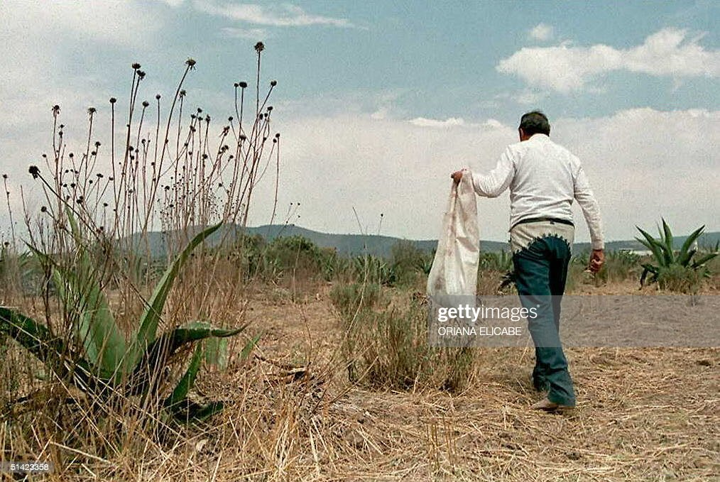 Charroor Mexican cowboywalks back to his ranch 07 May after collecting cactus leaves for dinner The charroswho were forced to dress differently than...
