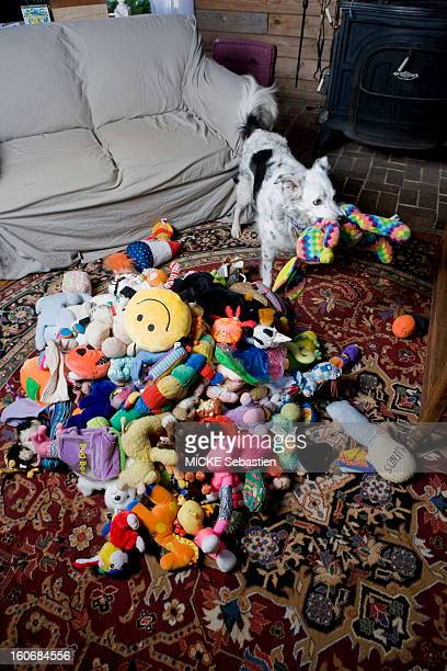Chaser a Border Collie bitch has managed to memorize the names of toys in 1022 and knows also categorizing them by function and form For his...