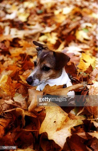 Chasing leaves is tiresome