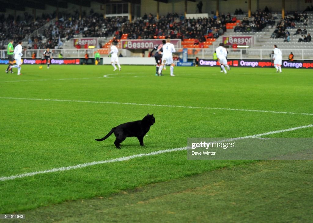 chat gay lorient