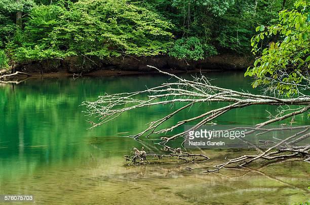 Chattahoochee river in summer