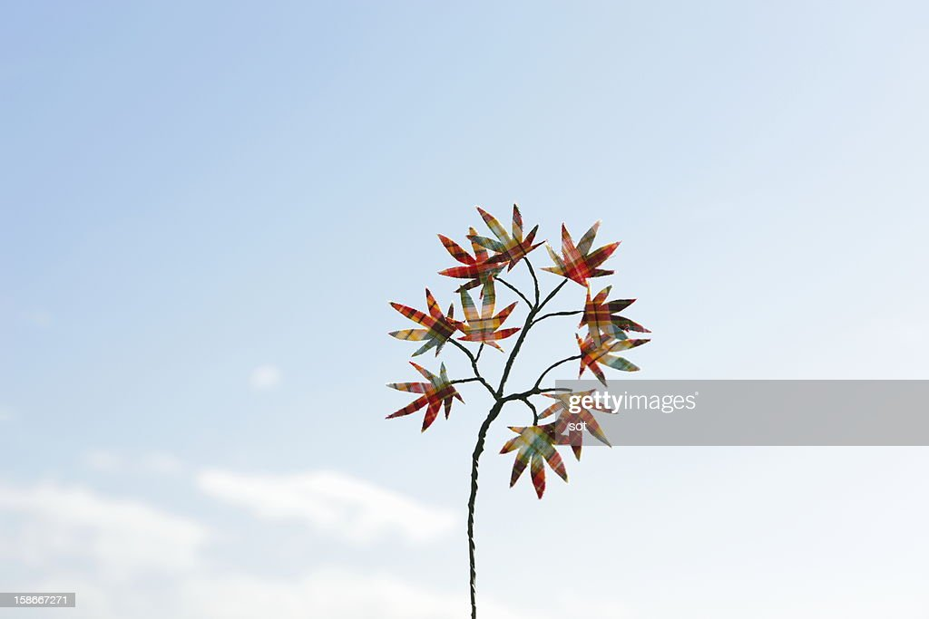 Checkered maple leaves background of blue sky : Stock Photo