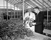 Checking a new variety of potatoes and its resistance to plant diseases at the Beltsville MD research center of the Department of Agriculture Dr E S...