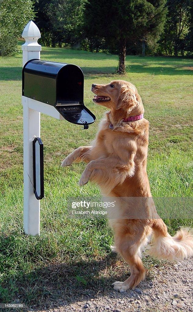 Checking mail : Stock Photo