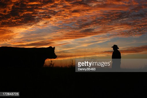 Checking the Cows at Sunset