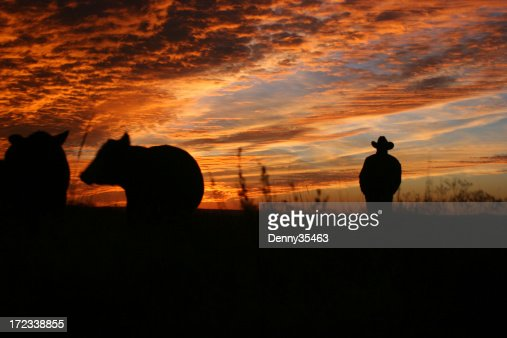 Checking the Herd at Sunset