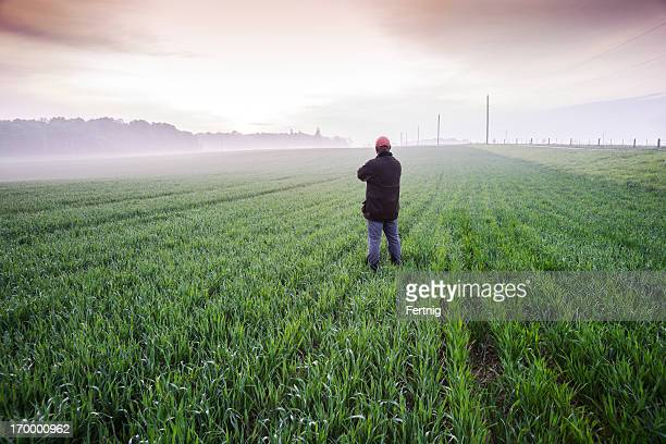 Checking the wheat fields