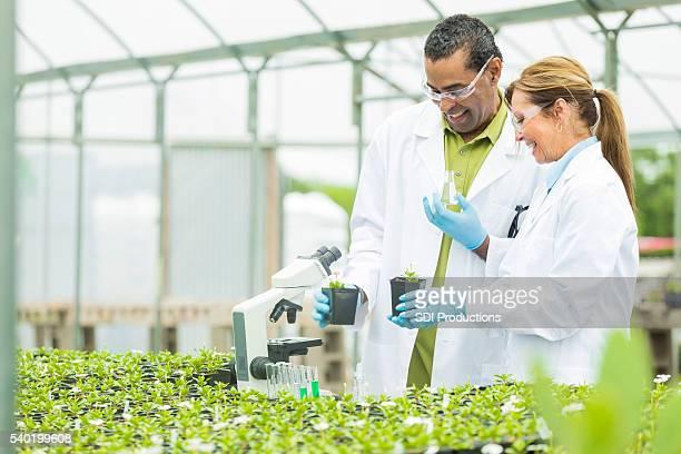 Fröhlich Biologen Arbeiten im Gewächshaus