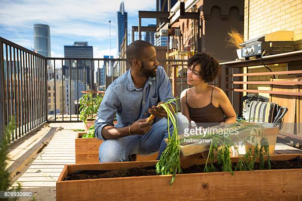 Cheerful Couple Picking Carrots in Rooftop Garden