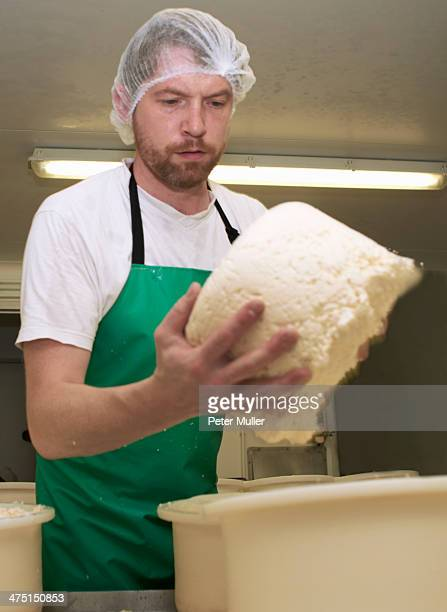Cheesemaker holding part processed cheese round at farm factory