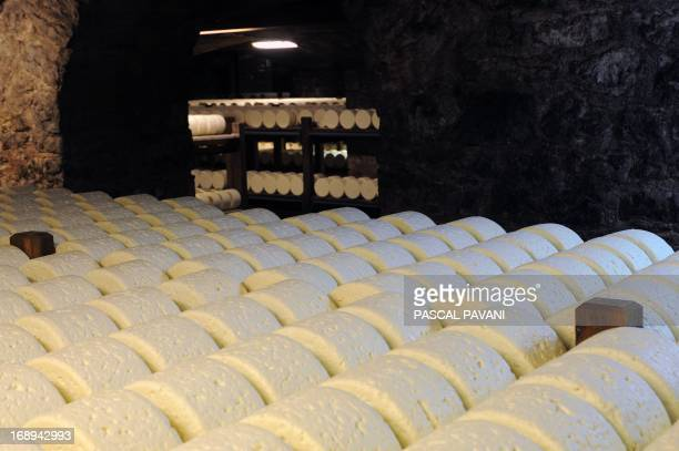 Cheeses mature at the Roquefort Societe company on May 16 2013 in a cellar at RoquefortsurSoulzon southern France Roquefort Societe is a subsidiary...