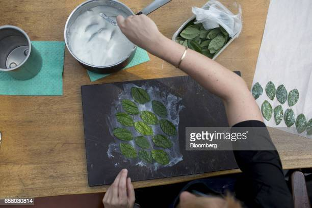 A chef prepares pan leaves with chilli paste inside the research and development kitchen at Gaggan restaurant in Bangkok Thailand on Friday May 5...