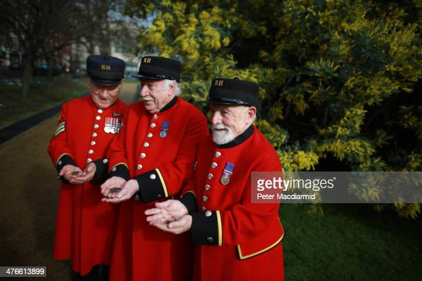 Chelsea Pensioners hold Poppy seeds at Cadogan Place Gardens on March 4 2014 in London England As part of this year's Chelsea in Bloom Festival...