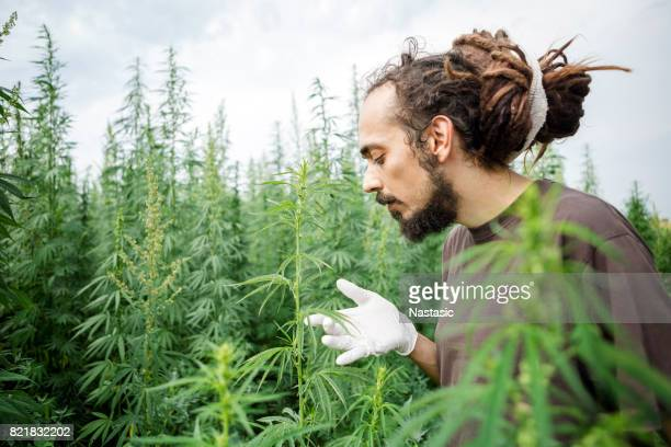 Chemical Modification of Hemp plant