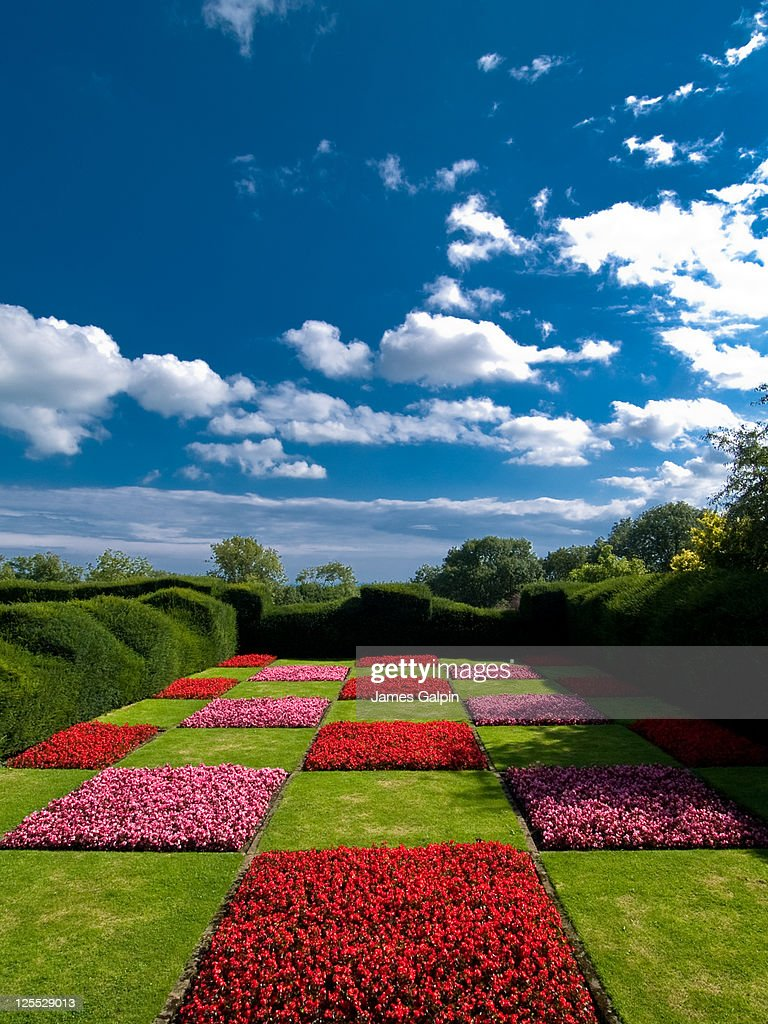 Chequered lawn : Stock Photo