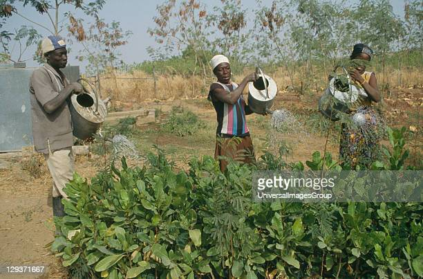 Chereponi Reforestation project Watering tree saplings by hand