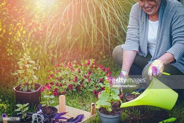 Passant de mon plantes