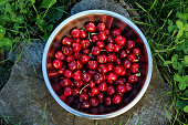 Cherries from the garden