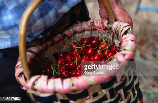 Cherries in a basket - Caceres, Central Extremadura : Stock Photo