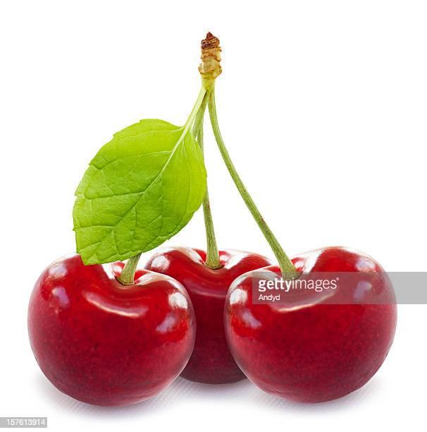 Cherries (XXXL)