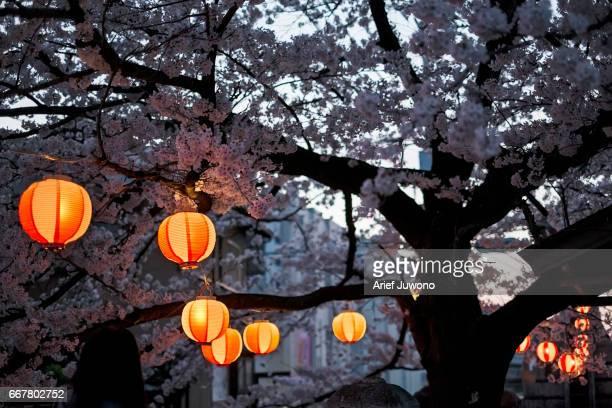 Cherry blossom and lantern