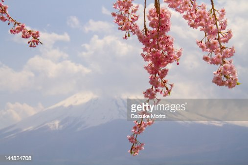 Cherry blossom and Mt Fuji, spring in Japan : Stock Photo