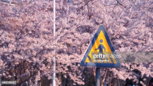Cherry blossom and sign