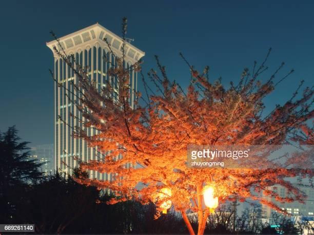 Cherry blossom and skyscraper