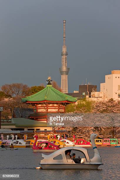 Cherry Blossom Boats at Ueno Park in Tokyo, Japan