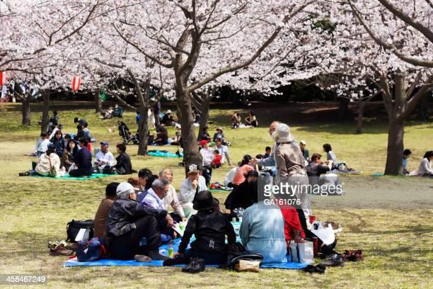 桜のお祝い