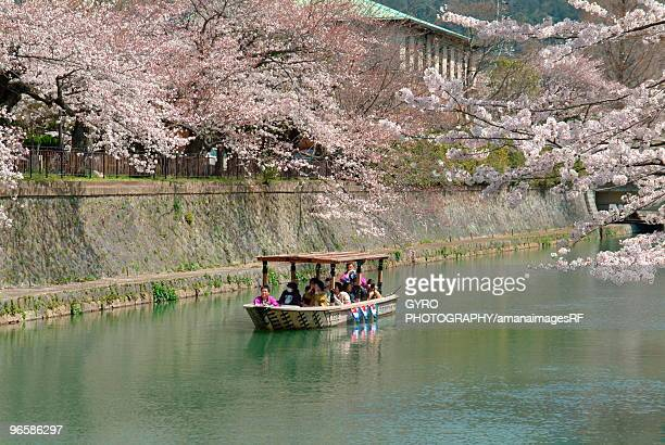Cherry blossom hanging over a boat on the canal on Lake Biwa,  Otsu,  Shiga Prefecture,  Honshu,  Ja
