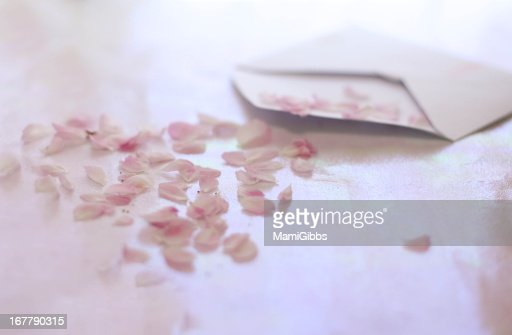 Cherry blossom petals came out of the envelope : Stock Photo